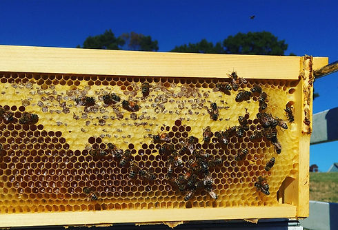 Beehive with unfiltered organic honey