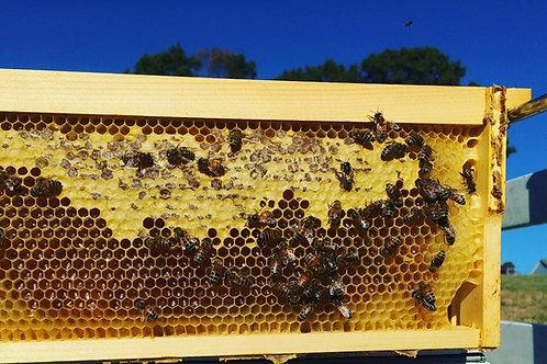 1/8 Hive Share