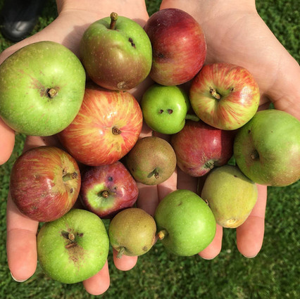 So many different apples!