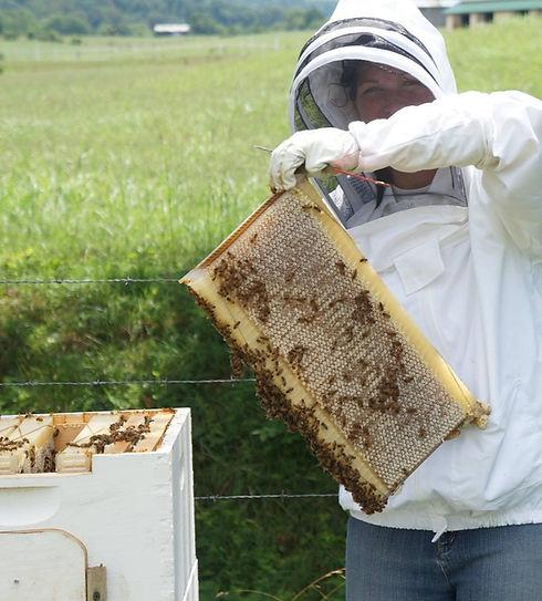 Purple Valley Farm Honeybee hives tended by beekeeper