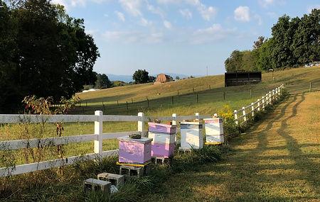 healthy beehives