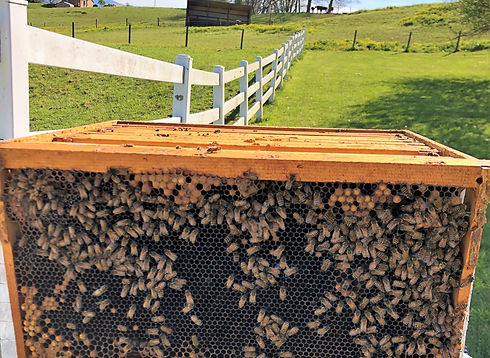 support beekeeping with a hiveshare purchase