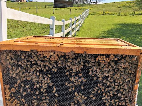 Quarter Hive Share
