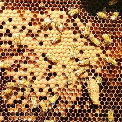 local apiary, raw honey