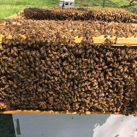 healthy beehive at organic farm and apiary