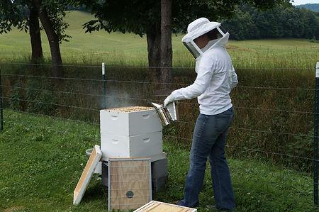 healthy bees at organic farm