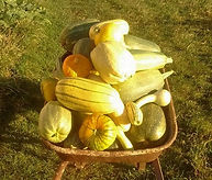 courges_edited.jpg