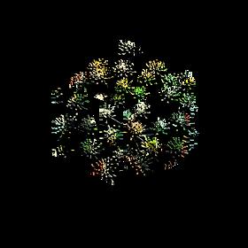 Logo NES fennel.png