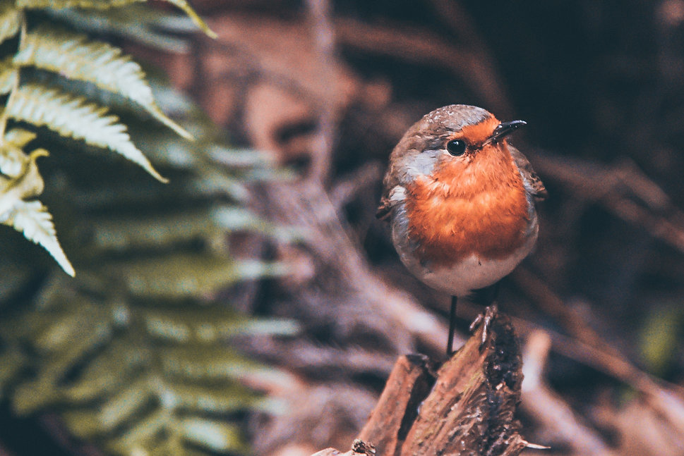 Noticing The Robins
