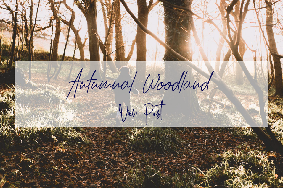 autumnal woodland.png