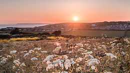 THE MOST BEAUTIFUL SUNSET IN DEVON! A summer walk in our wild field. Rewilding back to nature.