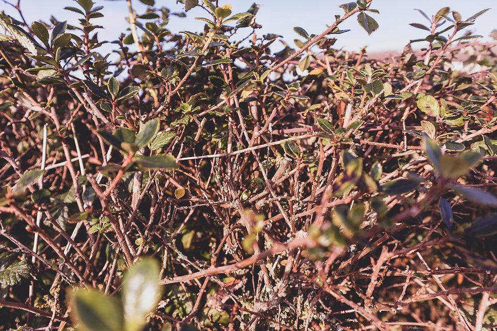 Hope Cove Walk Nov 19-1001.jpg