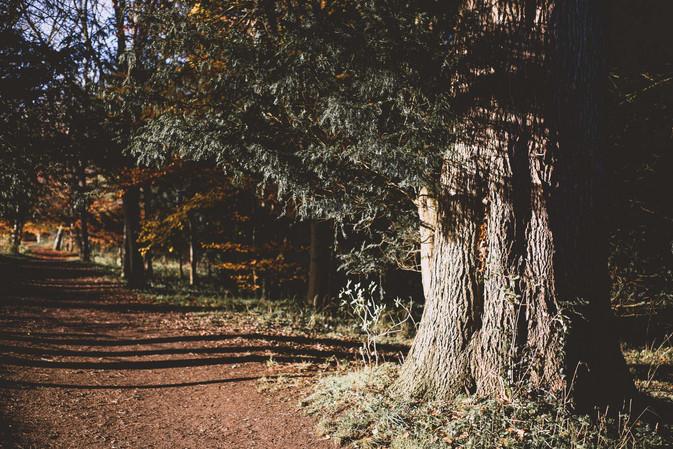 Sherborn Walks November 2017 - Emma Vinc