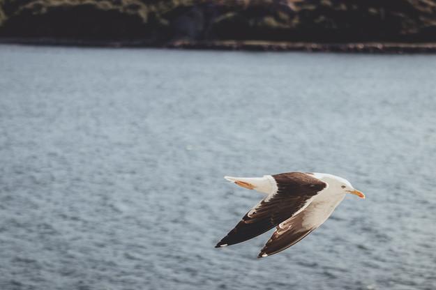 Norway Adventure-1045.jpg