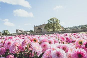 RHS Chatsworth-1025.jpg