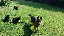 Ace_with_pups.233164140_std.jpg