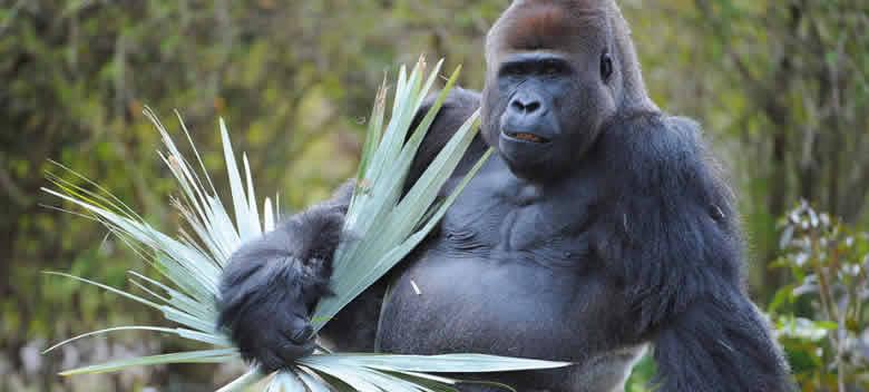 miami-zoo-hours