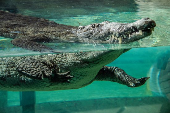 our-croc-exhibit-in-florida