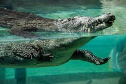 our-croc-exhibit-in-florida