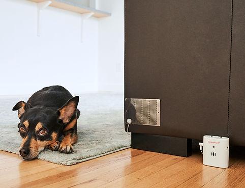 urine marking dog | dog or pet pee - urine alarm