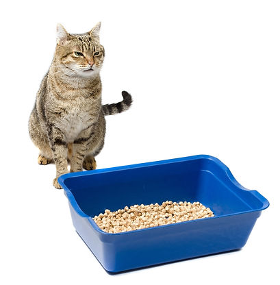 Cat and litter ttray