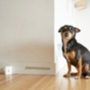 Spray Alert Pet Urine Alarm 17 use me.jp
