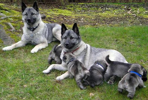 Oslo. Mom and Pups