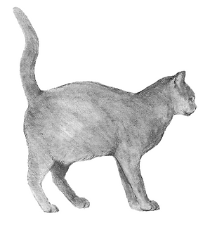 cat spraying or marking posture