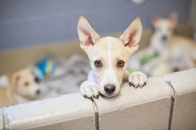 shutterstock_230808529 - Adoption puppies.jpg