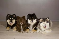 Balder, Melli, Akira og Nomine.jpg