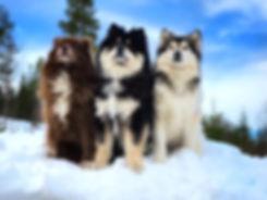 Melli, Akira og Nomine.jpg