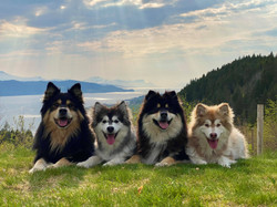 Sanko, Karhu, Akira og Mali.jpg