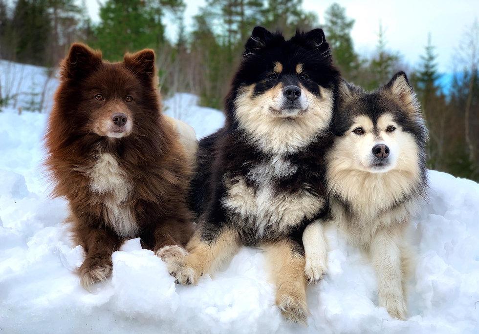 Melli, Akira og Nomine