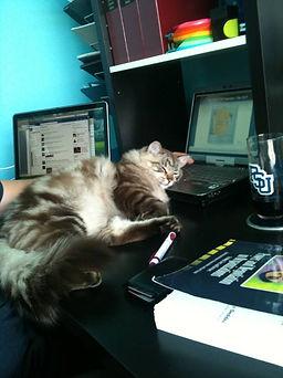 ragamuffin kittens snoozing