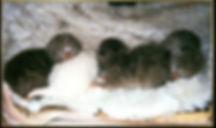 Blood groupeffects on kittens.jpg