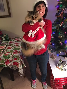 ragamuffin cat in santa outfit