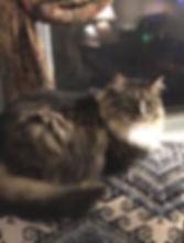 ragamuffin kittens Raggs