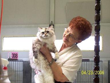 ragamuffin cat winner