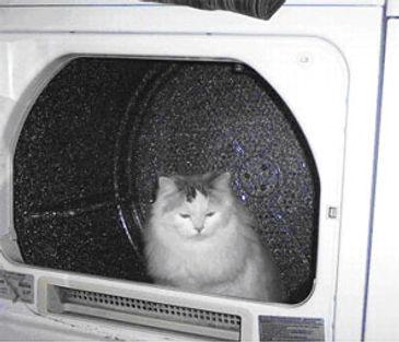 ragamuffin kittens hiding