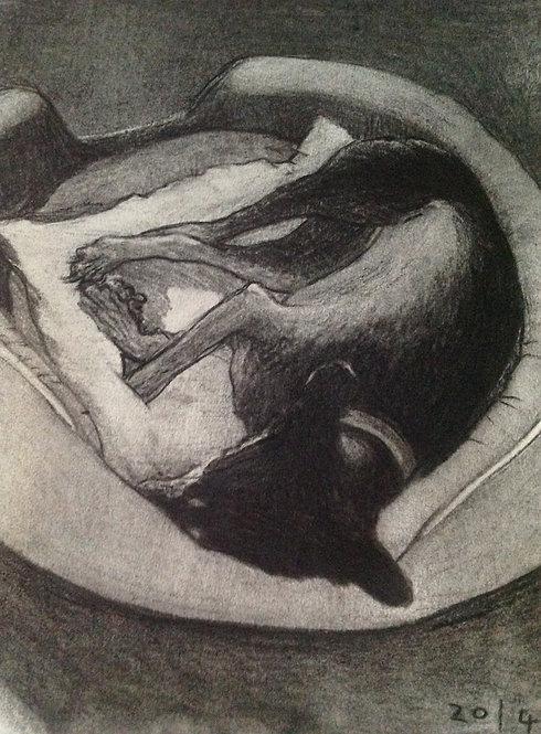 sleeping dog/charcoal/2016