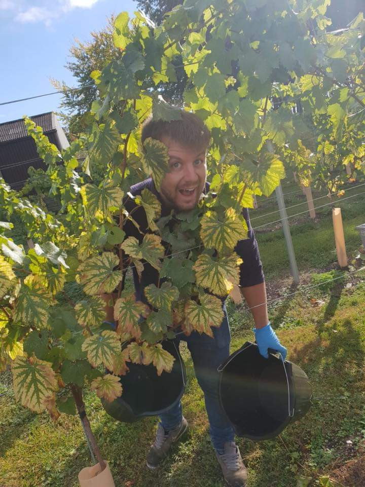Nat McConnell peeking through a chardonnay vine in three acre vineyard