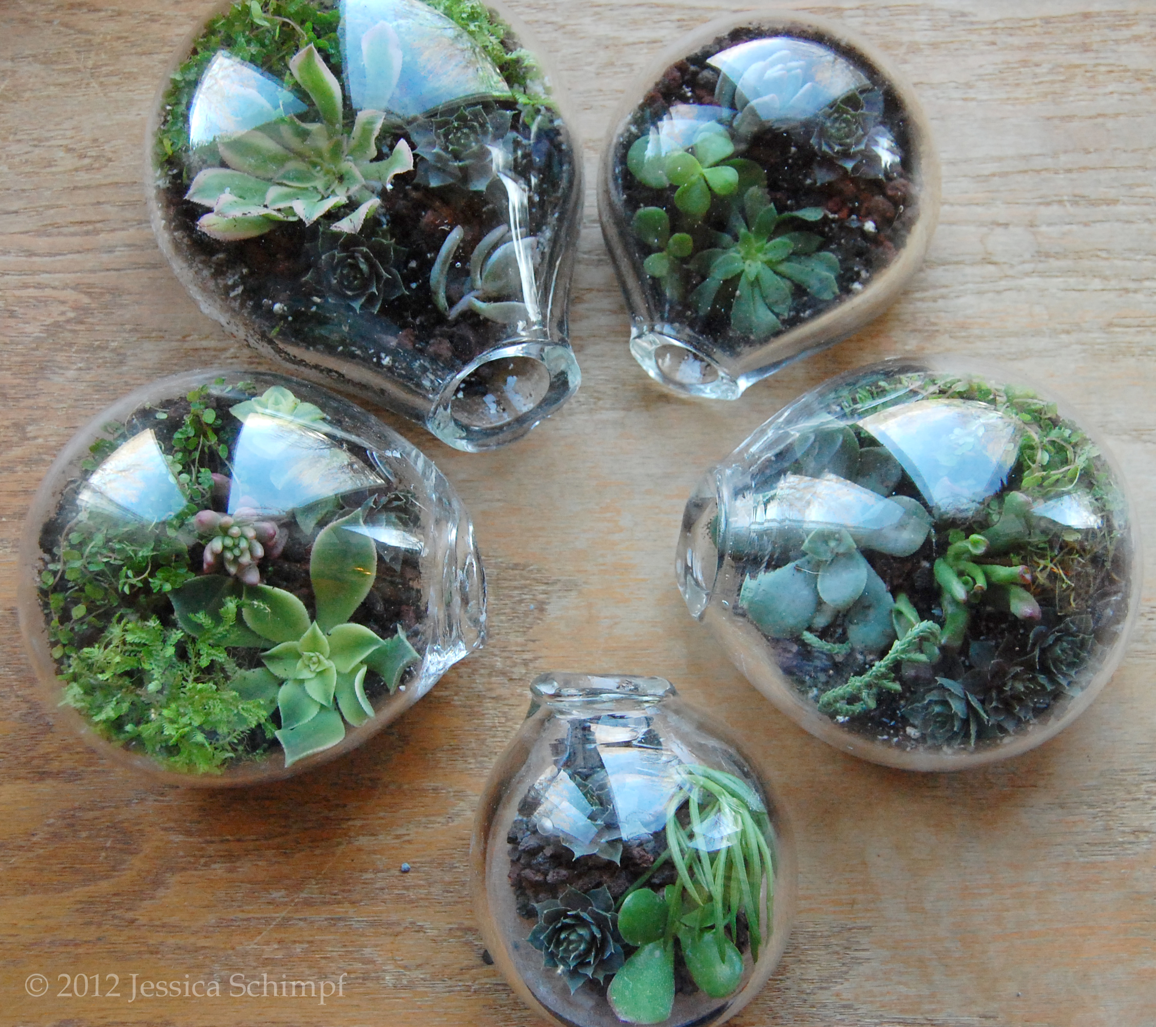 Blown Glass Terrariums
