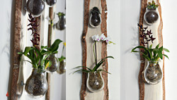 Pine Beetle Kill Terrarium Panel