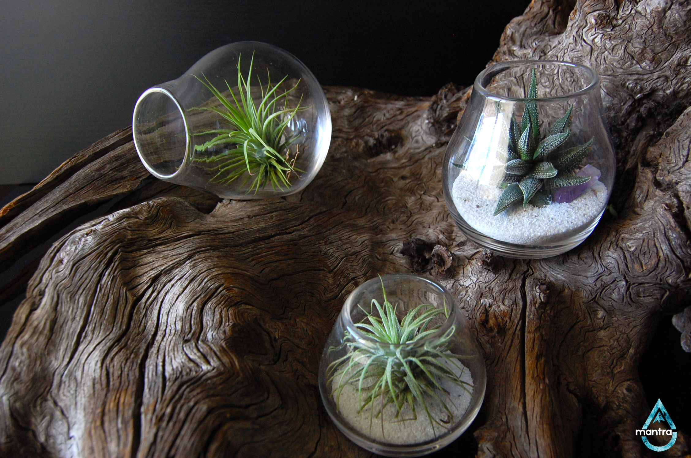 3 Piece Air Plant Set