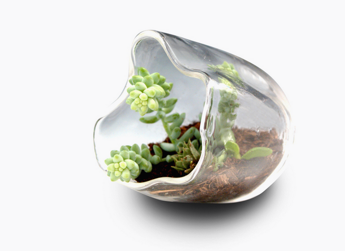 Blown Glass Organic Terrarium