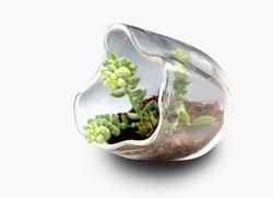 Blown Glass Organic Terrarium