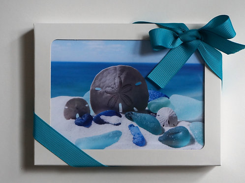 Boxed set of 8 note cards from the shell gallery