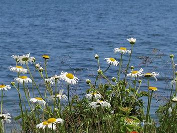 Field of Daisies 4328_edited.jpg
