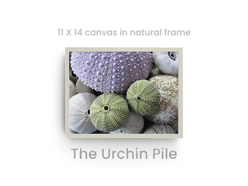 The Urchin Pile    6543