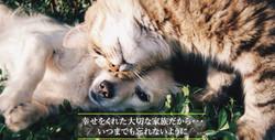 加須市のペット霊園(ポチたま霊苑)